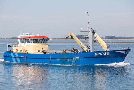 BRU-36